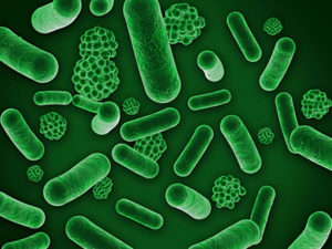 皮膚常在菌のイメージ