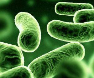 イソ吉草酸(3-メチルブタン酸)という低級脂肪酸の臭い